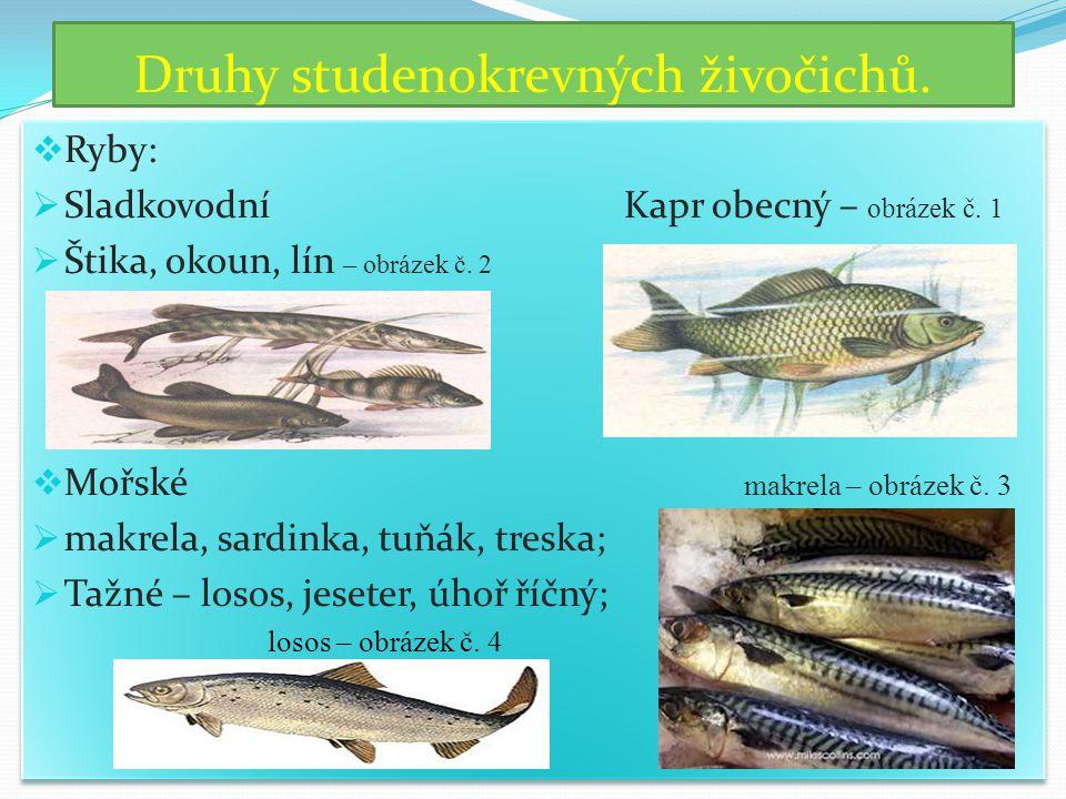Druhy studenokrevných živočichů.  Ryby:  Sladkovodní Kapr obecný – obrázek č. 1  Štika, okoun, lín – obrázek č. 2  Mořské makrela – obrázek č. 3 