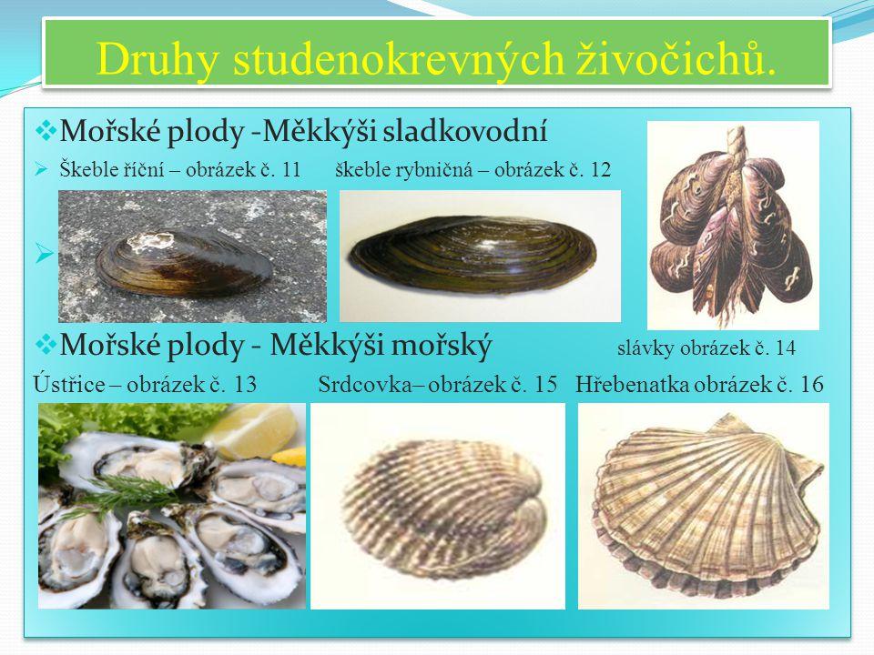 Druhy studenokrevných živočichů.  Mořské plody -Měkkýši sladkovodní  Škeble říční – obrázek č. 11 škeble rybničná – obrázek č. 12   Mořské plody -