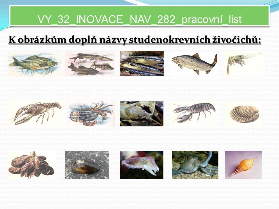 VY_32_INOVACE_NAV_282_pracovní_list K obrázkům doplň názvy studenokrevních živočichů: