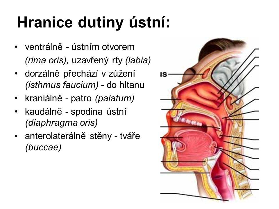 Hranice dutiny ústní: ventrálně - ústním otvorem (rima oris), uzavřený rty (labia) dorzálně přechází v zúžení (isthmus faucium) - do hltanu kraniálně