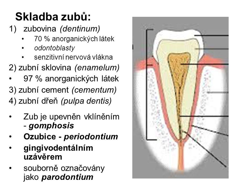 Skladba zubů: 1)zubovina (dentinum) 70 % anorganických látek odontoblasty senzitivní nervová vlákna 2) zubní sklovina (enamelum) 97 % anorganických lá