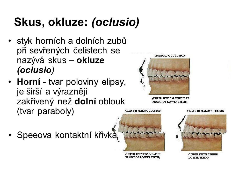 Skus, okluze: (oclusio) styk horních a dolních zubů při sevřených čelistech se nazývá skus – okluze (oclusio) Horní - tvar poloviny elipsy, je širší a