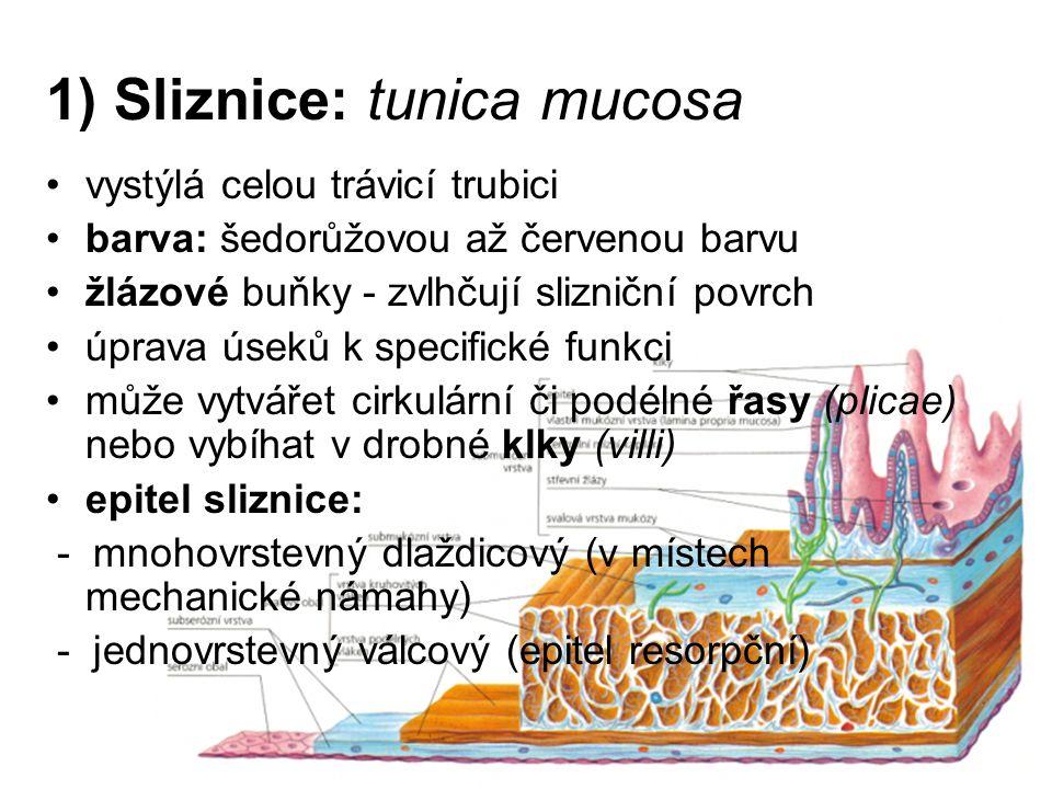 1) Sliznice: tunica mucosa vystýlá celou trávicí trubici barva: šedorůžovou až červenou barvu žlázové buňky - zvlhčují slizniční povrch úprava úseků k