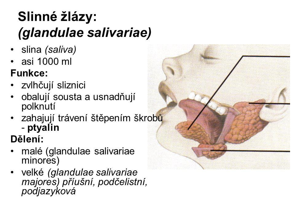 Slinné žlázy: (glandulae salivariae) slina (saliva) asi 1000 ml Funkce: zvlhčují sliznici obalují sousta a usnadňují polknutí zahajují trávení štěpení