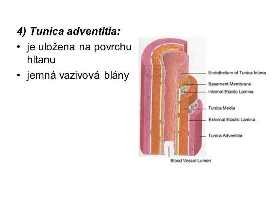 4) Tunica adventitia: je uložena na povrchu hltanu jemná vazivová blány
