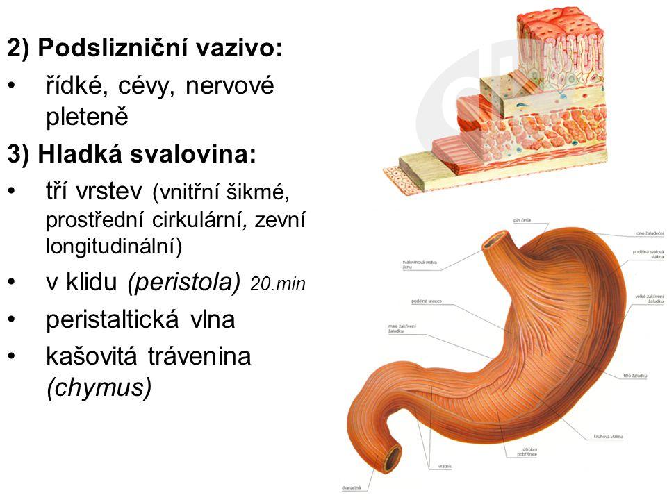2) Podslizniční vazivo: řídké, cévy, nervové pleteně 3) Hladká svalovina: tří vrstev (vnitřní šikmé, prostřední cirkulární, zevní longitudinální) v kl