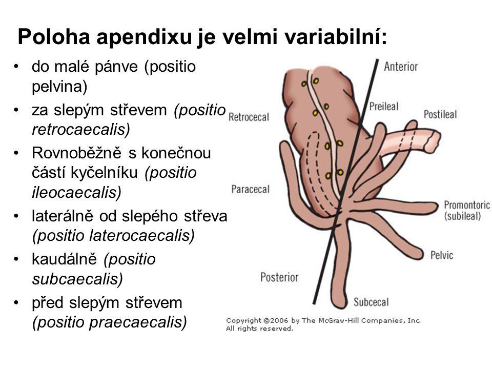 Poloha apendixu je velmi variabilní: do malé pánve (positio pelvina) za slepým střevem (positio retrocaecalis) Rovnoběžně s konečnou částí kyčelníku (