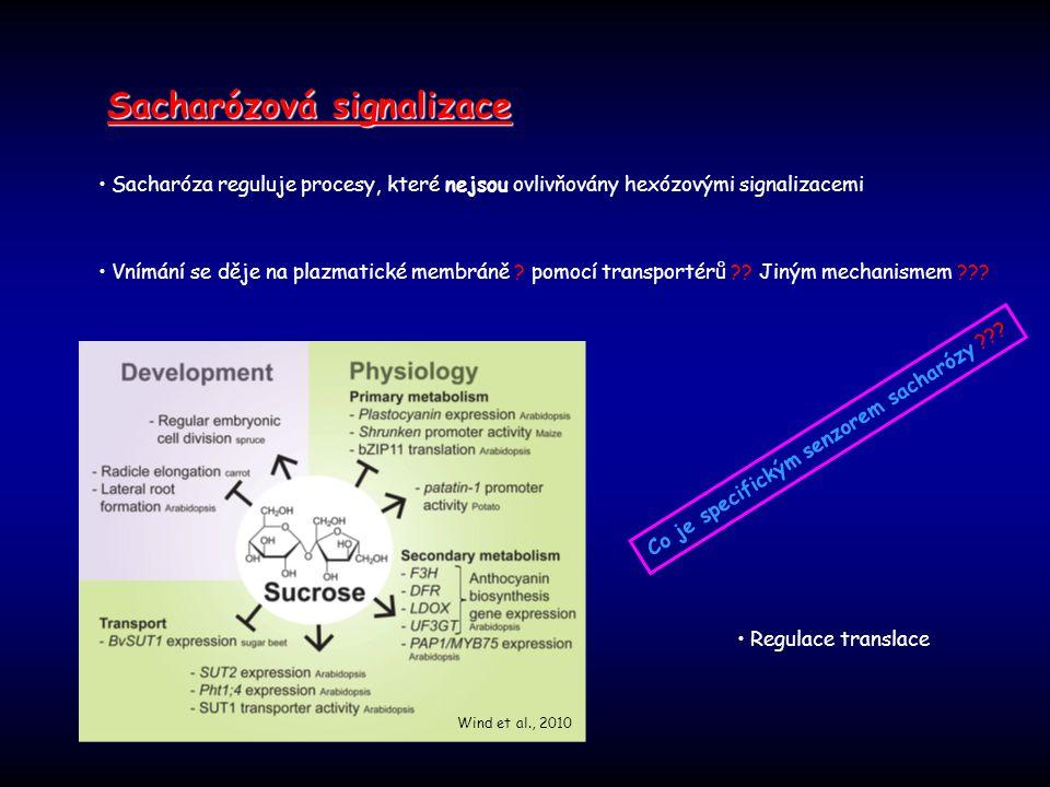 Sacharóza reguluje procesy, které nejsou ovlivňovány hexózovými signalizacemi Vnímání se děje na plazmatické membráně ? pomocí transportérů ?? Jiným m