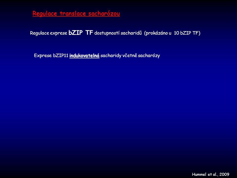 Regulace translace sacharózou Hummel et al., 2009 Exprese bZIP11 indukovatelná sacharidy včetně sacharózy Regulace exprese bZIP TF dostupností sachari