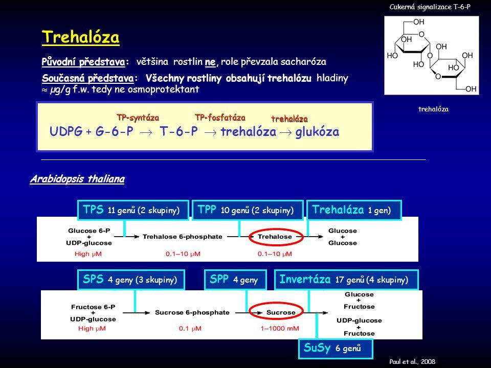 Cukerná signalizace T-6-PTrehalóza trehalóza Původní představa: většina rostlin ne, role převzala sacharóza Současná představa: Všechny rostliny obsah