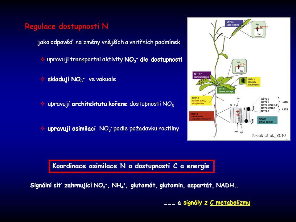 Regulace dostupnosti N  skladují NO 3 - ve vakuole  upravují transportní aktivity NO 3 - dle dostupnosti  upravují architektutu kořene dostupnosti