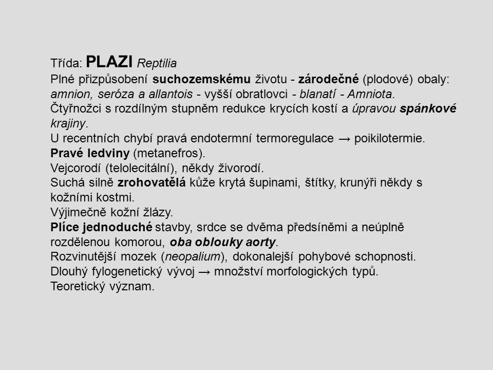 Třída: PLAZI Reptilia Plné přizpůsobení suchozemskému životu - zárodečné (plodové) obaly: amnion, seróza a allantois - vyšší obratlovci - blanatí - Am