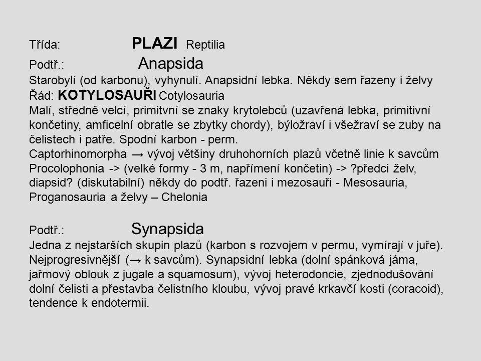 Třída: PLAZI Reptilia Podtř.: Anapsida Starobylí (od karbonu), vyhynulí. Anapsidní lebka. Někdy sem řazeny i želvy Řád: KOTYLOSAUŘI Cotylosauria Malí,