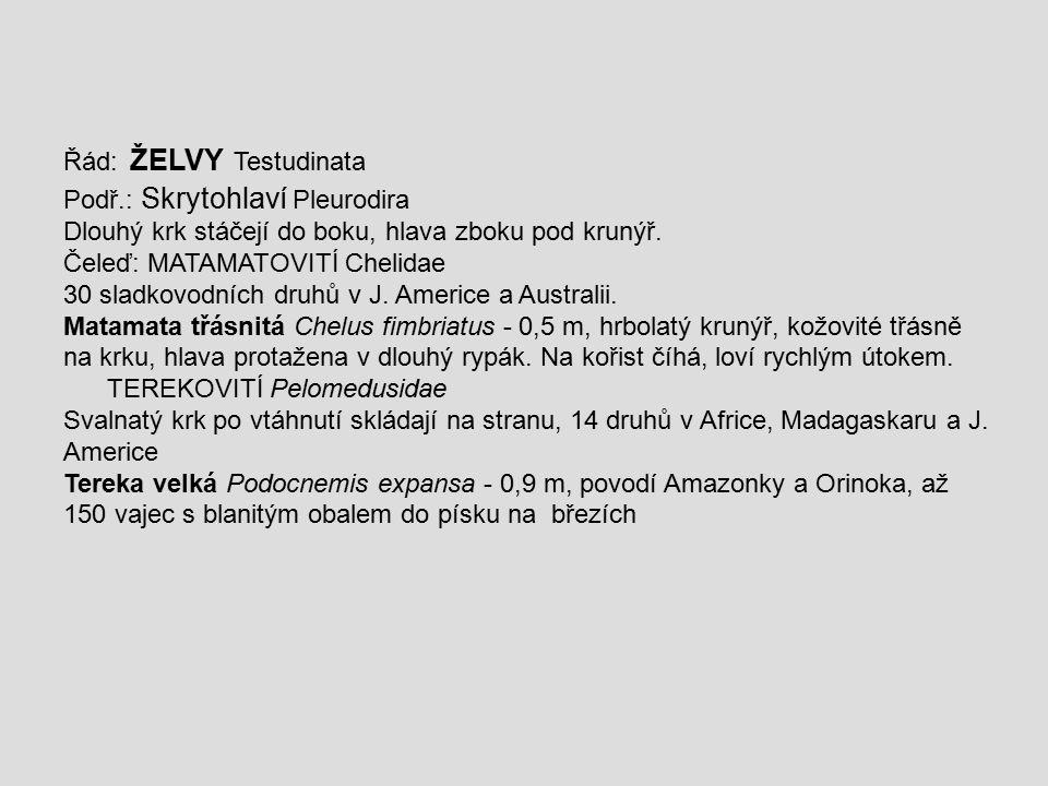 Řád: ŽELVY Testudinata Podř.: Skrytohlaví Pleurodira Dlouhý krk stáčejí do boku, hlava zboku pod krunýř. Čeleď: MATAMATOVITÍ Chelidae 30 sladkovodních