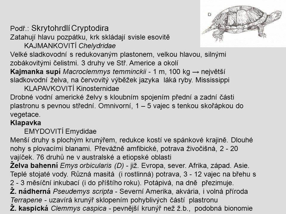 Podř.: Skrytohrdlí Cryptodira Zatahují hlavu pozpátku, krk skládají svisle esovitě KAJMANKOVITÍ Chelydridae Velké sladkovodní s redukovaným plastonem,