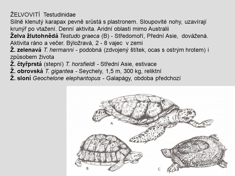 ŽELVOVITÍ Testudinidae Silně klenutý karapax pevně srůstá s plastronem. Sloupovité nohy, uzavírají krunýř po vtažení. Denní aktivita. Aridní oblasti m