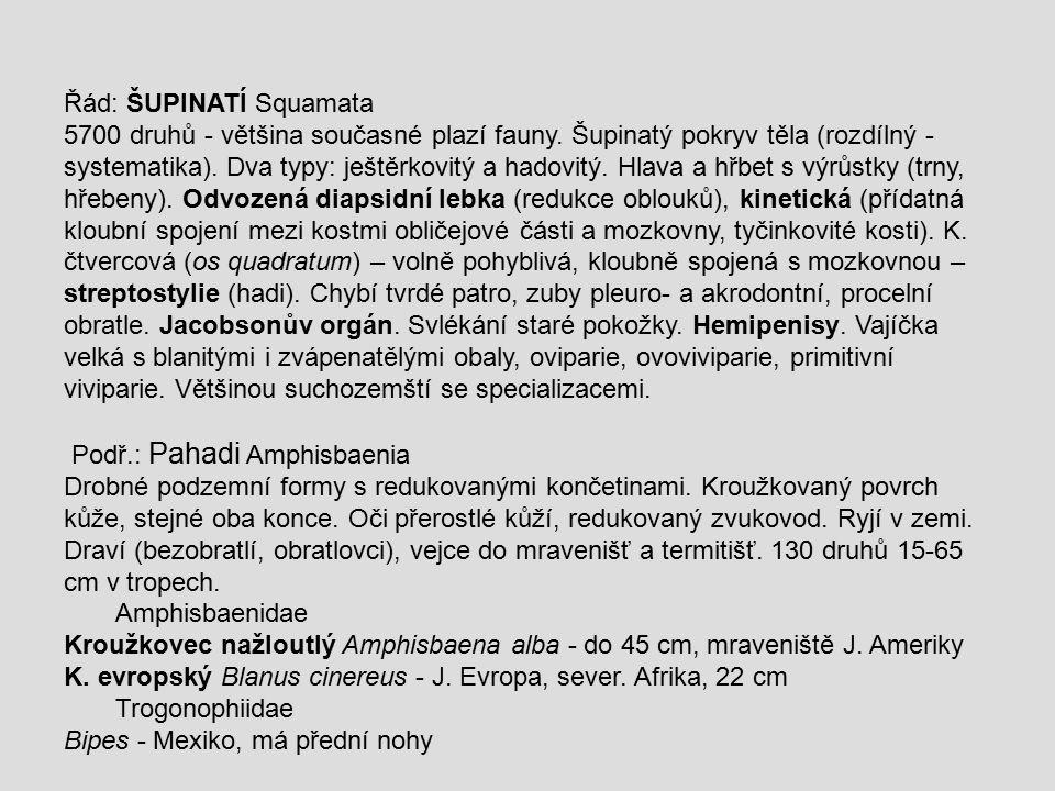 Řád: ŠUPINATÍ Squamata 5700 druhů - většina současné plazí fauny. Šupinatý pokryv těla (rozdílný - systematika). Dva typy: ještěrkovitý a hadovitý. Hl