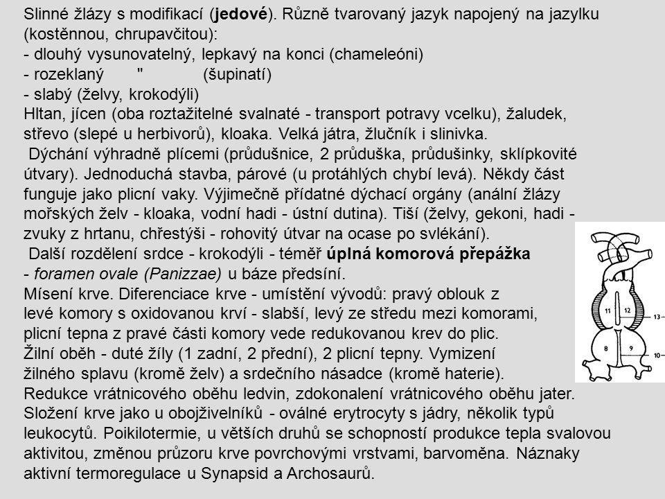 Slinné žlázy s modifikací (jedové). Různě tvarovaný jazyk napojený na jazylku (kostěnnou, chrupavčitou): - dlouhý vysunovatelný, lepkavý na konci (cha