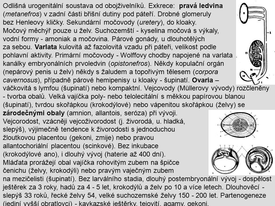 Řád: ŠUPINATÍ Squamata 5700 druhů - většina současné plazí fauny.