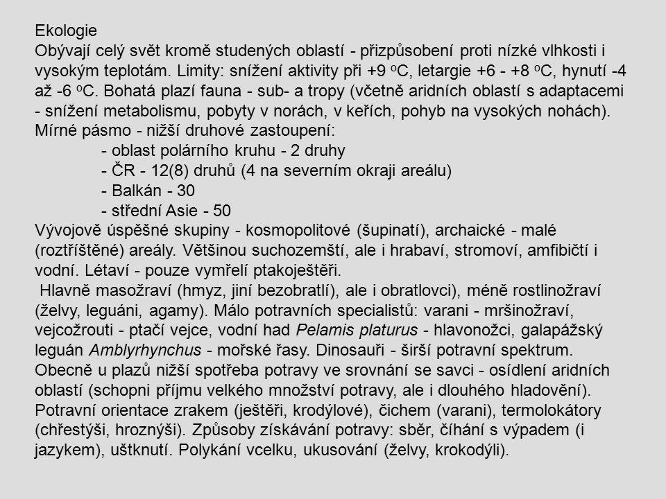 Podř.: Ještěři Sauria (Lacertilia) Většinou čtyřnohý typ těla, neúplná streptostylie, chybí horní jařmový oblouk.