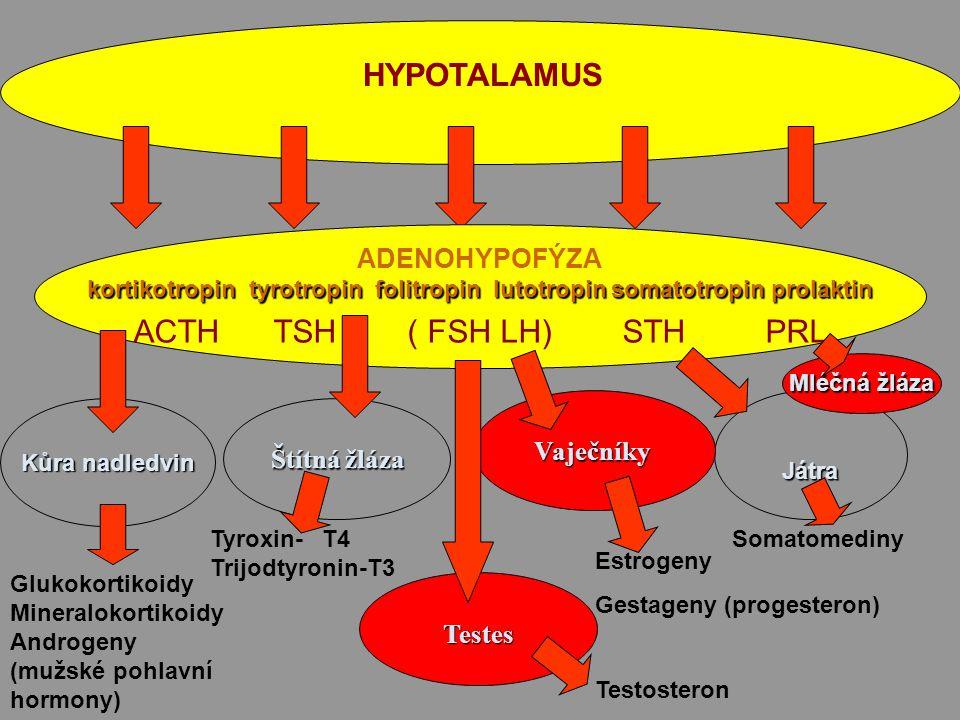 Puberta objevují se velké rozdíly Puberta objevují se velké rozdíly Chlapci Dívky Chlapci Dívky hypofýza hypofýza FSH,LH FSH,LH testes ovaria testes ovaria testosteron estrogen testosteron estrogen kosti do délky pánev do šířky, prsa kosti do délky pánev do šířky, prsa svalová hmota ukládání tuku, růst svalová hmota ukládání tuku, růst ukončen dříve ukončen dříve
