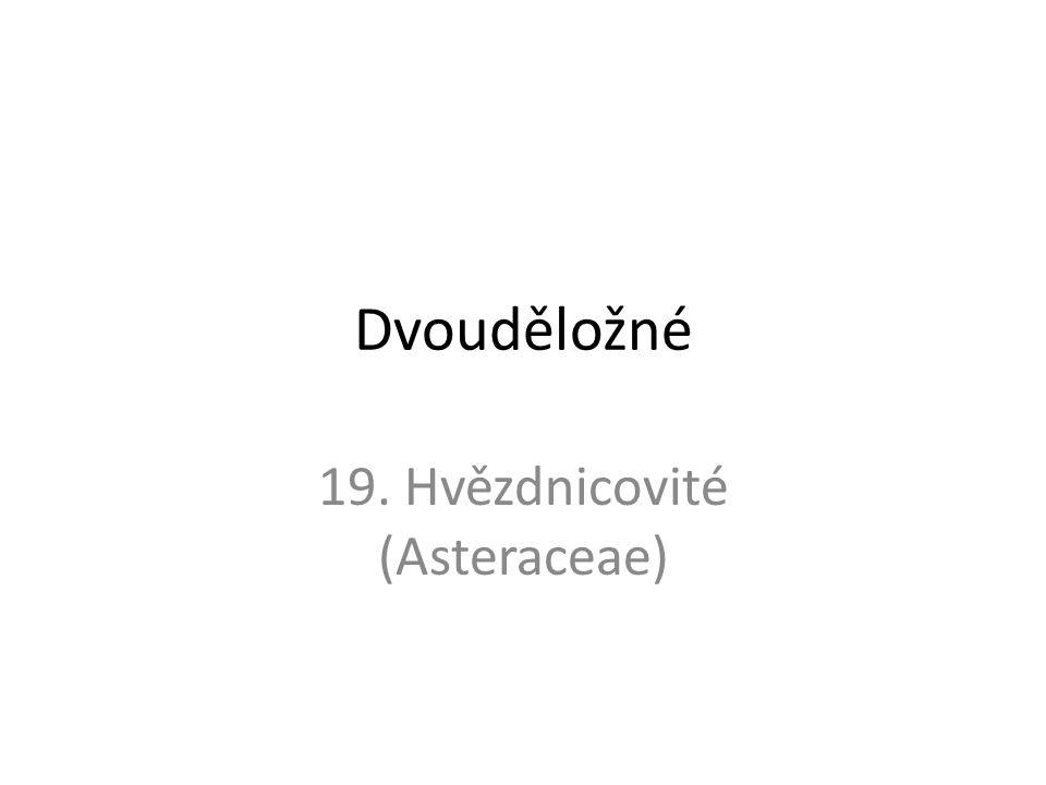 Dvouděložné 19. Hvězdnicovité (Asteraceae)