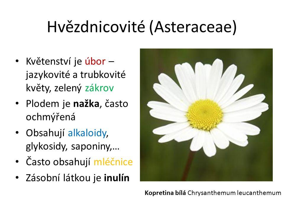 Hvězdnicovité (Asteraceae) Květenství je úbor – jazykovité a trubkovité květy, zelený zákrov Plodem je nažka, často ochmýřená Obsahují alkaloidy, glyk
