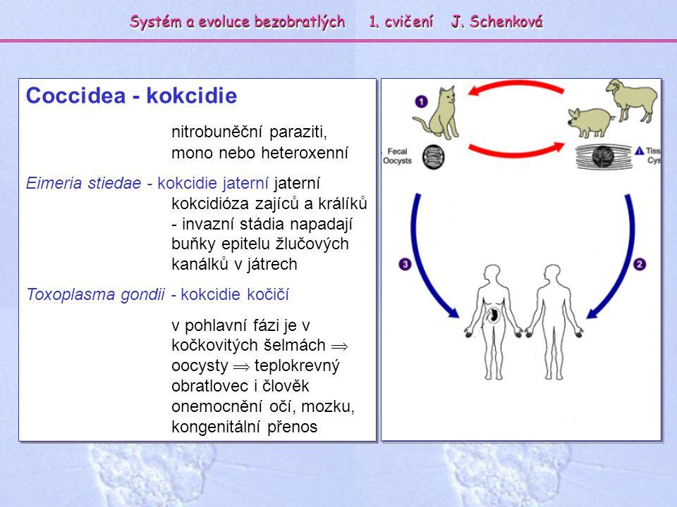 Coccidea - kokcidie nitrobuněční paraziti, mono nebo heteroxenní Eimeria stiedae - kokcidie jaterní jaterní kokcidióza zajíců a králíků - invazní stád