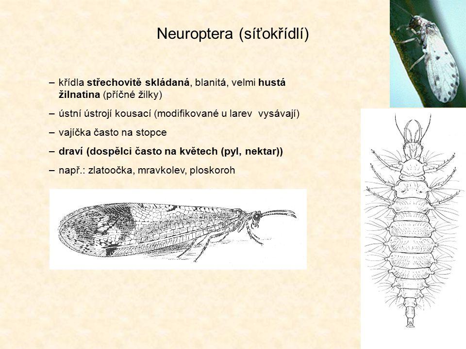 Neuroptera (síťokřídlí) –křídla střechovitě skládaná, blanitá, velmi hustá žilnatina (příčné žilky) –ústní ústrojí kousací (modifikované u larev vysáv