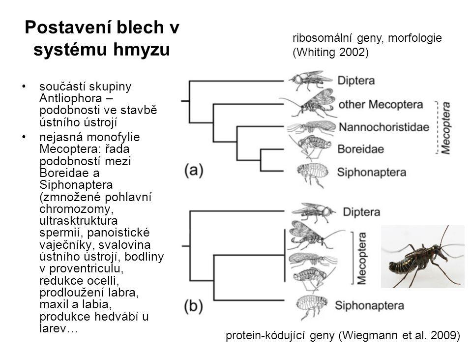 Postavení blech v systému hmyzu součástí skupiny Antliophora – podobnosti ve stavbě ústního ústrojí nejasná monofylie Mecoptera: řada podobností mezi Boreidae a Siphonaptera (zmnožené pohlavní chromozomy, ultrasktruktura spermií, panoistické vaječníky, svalovina ústního ústrojí, bodliny v proventriculu, redukce ocelli, prodloužení labra, maxil a labia, produkce hedvábí u larev… ribosomální geny, morfologie (Whiting 2002) protein-kódující geny (Wiegmann et al.