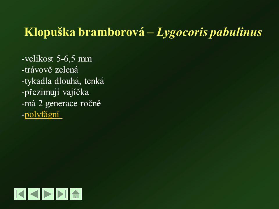 Klopuška bramborová – Lygocoris pabulinus -velikost 5-6,5 mm -trávově zelená -tykadla dlouhá, tenká -přezimují vajíčka -má 2 generace ročně -polyfágnípolyfágní