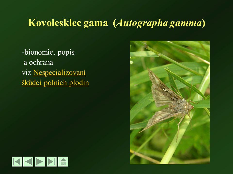 Kovolesklec gama (Autographa gamma) -bionomie, popis a ochrana viz NespecializovaníNespecializovaní škůdci polních plodin