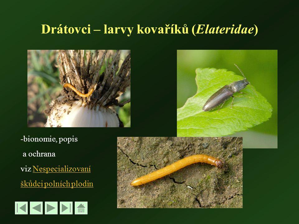 Drátovci – larvy kovaříků (Elateridae) -bionomie, popis a ochrana viz NespecializovaníNespecializovaní škůdci polních plodin
