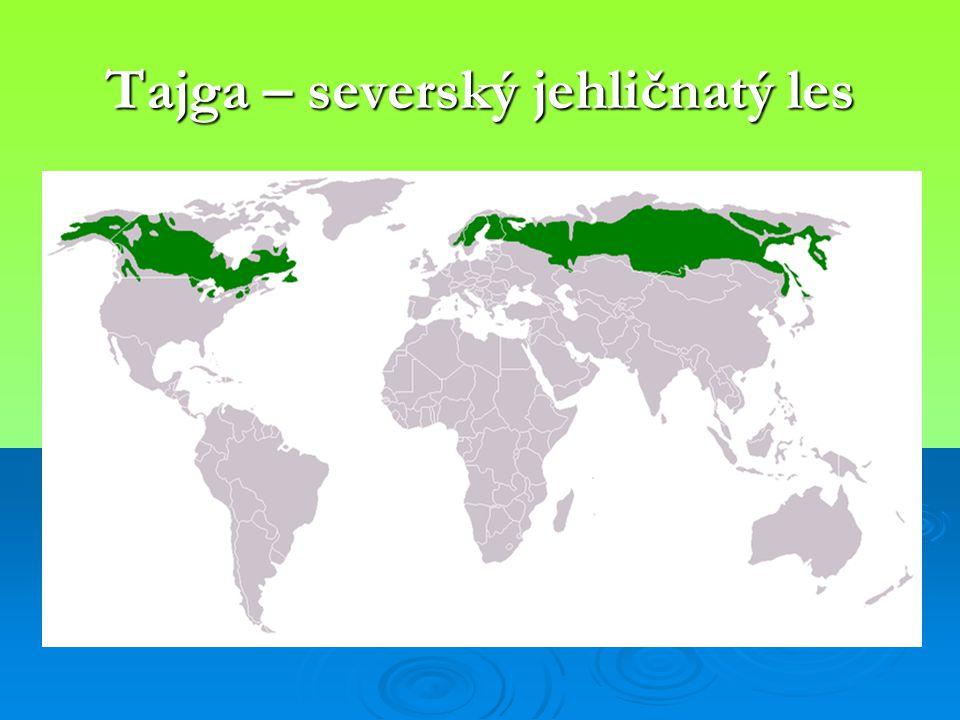 Tajga – severský jehličnatý les