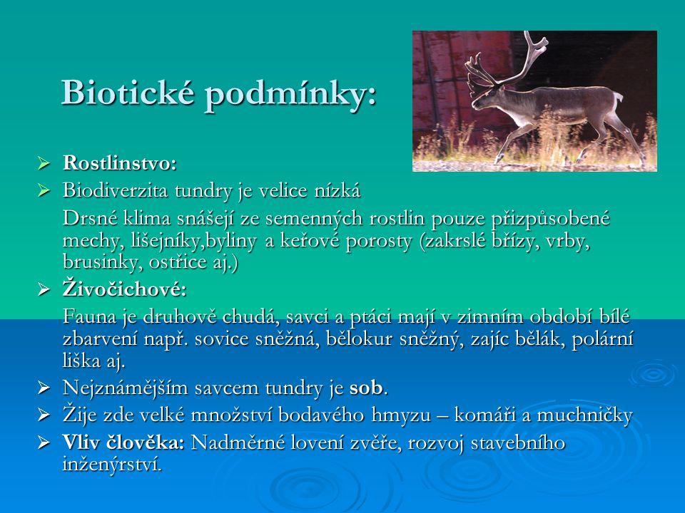 Biotické podmínky:  Rostlinstvo:  Biodiverzita tundry je velice nízká Drsné klima snášejí ze semenných rostlin pouze přizpůsobené mechy, lišejníky,b