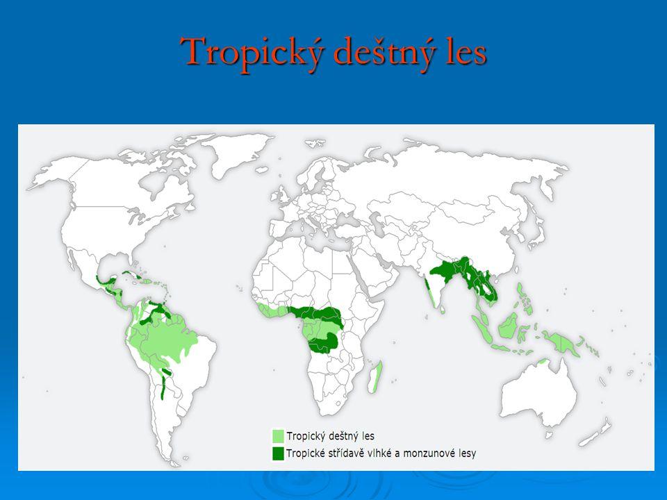 Základní charakteristika:  Abiotické podmínky: - celoroční vysoké srážky 2000 až 12 000 mm - 100% vlhkost vzduchu - průměrná teplota 25 – 30 °C, - živiny – vázány v biomase, půda relativně chudá, časté deště vyplavují živiny z humusu a huminové kyseliny = půda je kyselá, rychlý bakteriální rozklad  Biotické podmínky: - druhová diverzita - biom s největším počtem druhů organismů Živočichové: Živočichové: Ptáci - papoušci, kolibříci, tukani.