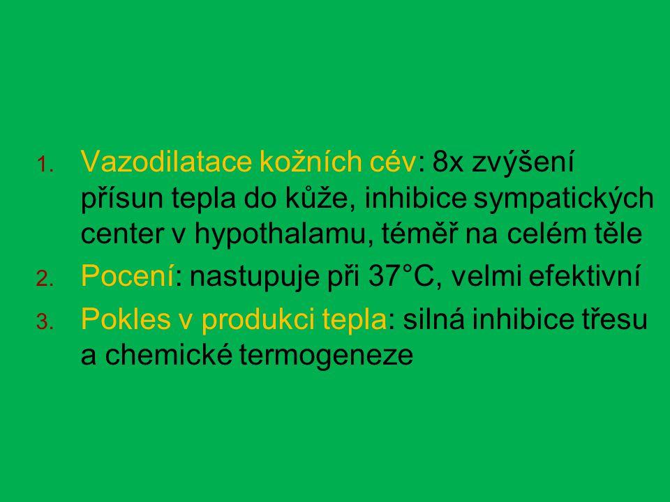  Vazodilatace kožních cév: 8x zvýšení přísun tepla do kůže, inhibice sympatických center v hypothalamu, téměř na celém těle  Pocení: nastupuje při 37°C, velmi efektivní  Pokles v produkci tepla: silná inhibice třesu a chemické termogeneze