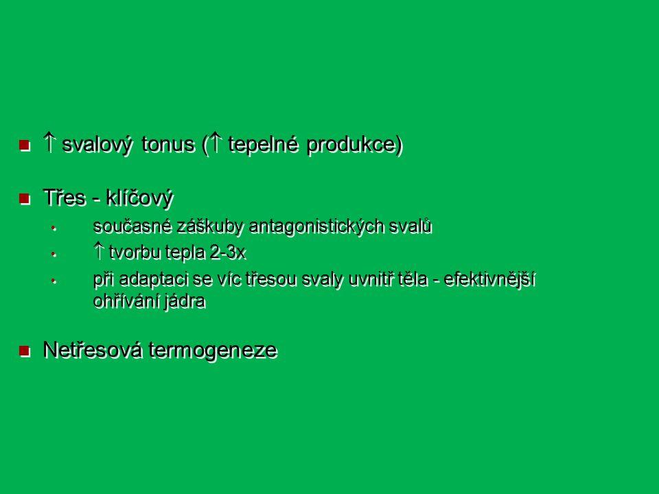  svalový tonus (  tepelné produkce) Třes - klíčový současné záškuby antagonistických svalů  tvorbu tepla 2-3x při adaptaci se víc třesou svaly uvnitř těla - efektivnější ohřívání jádra Netřesová termogeneze  svalový tonus (  tepelné produkce) Třes - klíčový současné záškuby antagonistických svalů  tvorbu tepla 2-3x při adaptaci se víc třesou svaly uvnitř těla - efektivnější ohřívání jádra Netřesová termogeneze