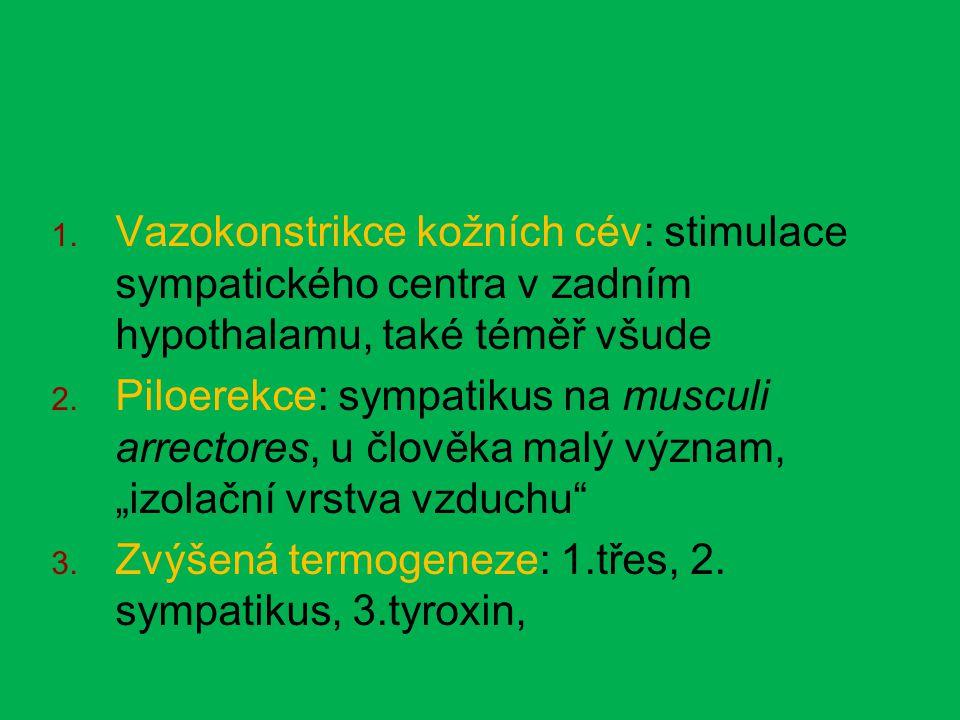 """ Vazokonstrikce kožních cév: stimulace sympatického centra v zadním hypothalamu, také téměř všude  Piloerekce: sympatikus na musculi arrectores, u člověka malý význam, """"izolační vrstva vzduchu  Zvýšená termogeneze: 1.třes, 2."""
