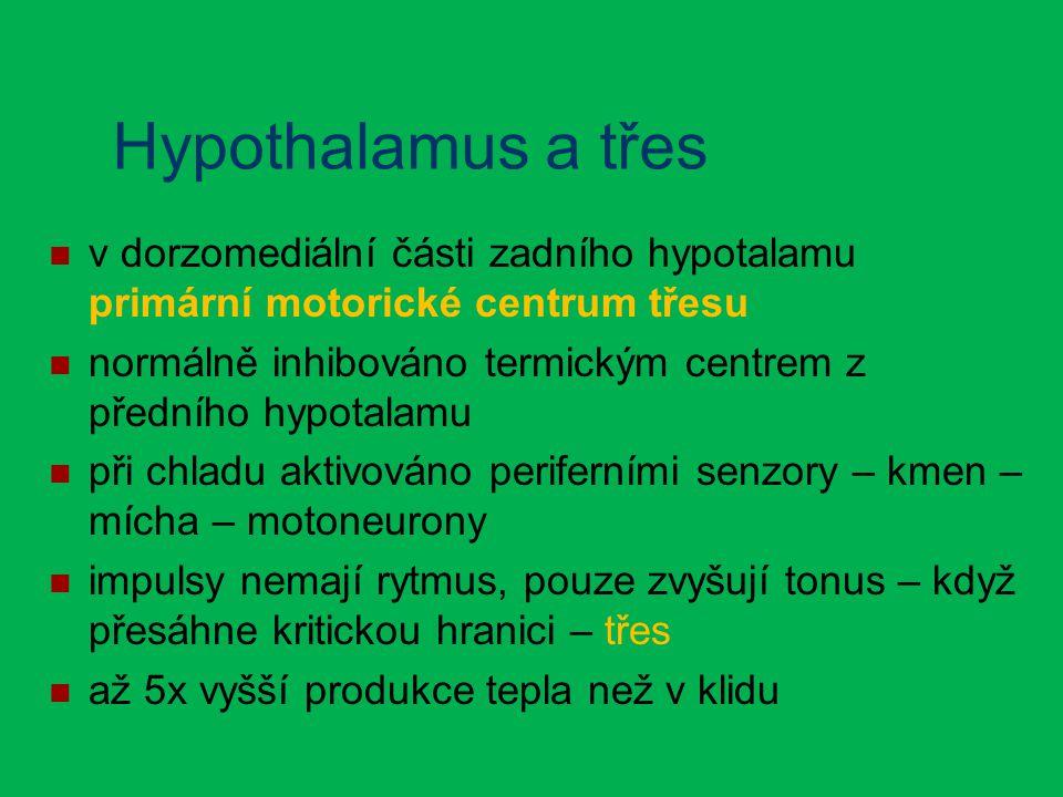 Hypothalamus a třes v dorzomediální části zadního hypotalamu primární motorické centrum třesu normálně inhibováno termickým centrem z předního hypotalamu při chladu aktivováno periferními senzory – kmen – mícha – motoneurony impulsy nemají rytmus, pouze zvyšují tonus – když přesáhne kritickou hranici – třes až 5x vyšší produkce tepla než v klidu
