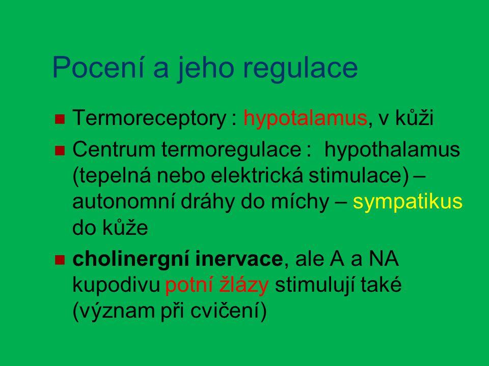 Pocení a jeho regulace Termoreceptory : hypotalamus, v kůži Centrum termoregulace : hypothalamus (tepelná nebo elektrická stimulace) – autonomní dráhy do míchy – sympatikus do kůže cholinergní inervace, ale A a NA kupodivu potní žlázy stimulují také (význam při cvičení)