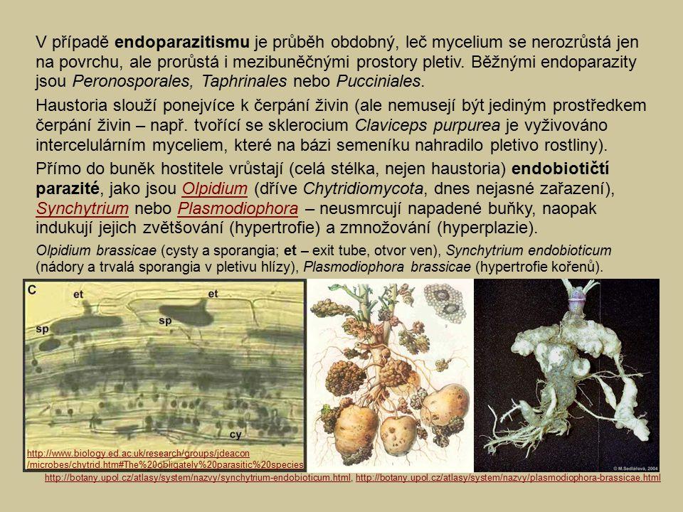 V případě endoparazitismu je průběh obdobný, leč mycelium se nerozrůstá jen na povrchu, ale prorůstá i mezibuněčnými prostory pletiv. Běžnými endopara