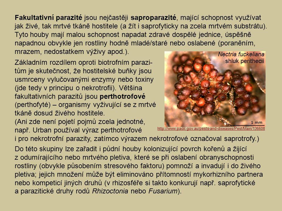 Fakultativní parazité jsou nejčastěji saproparazité, mající schopnost využívat jak živé, tak mrtvé tkáně hostitele (a žít i saprofyticky na zcela mrtv