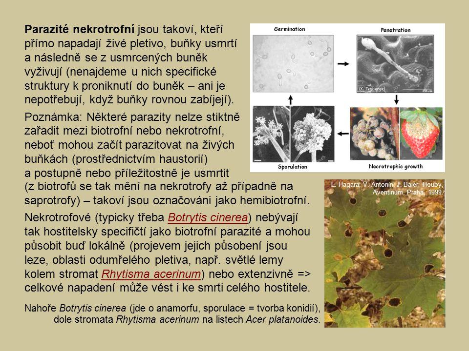 (z biotrofů se tak mění na nekrotrofy až případně na saprotrofy) – takoví jsou označováni jako hemibiotrofní. Nekrotrofové (typicky třeba Botrytis cin