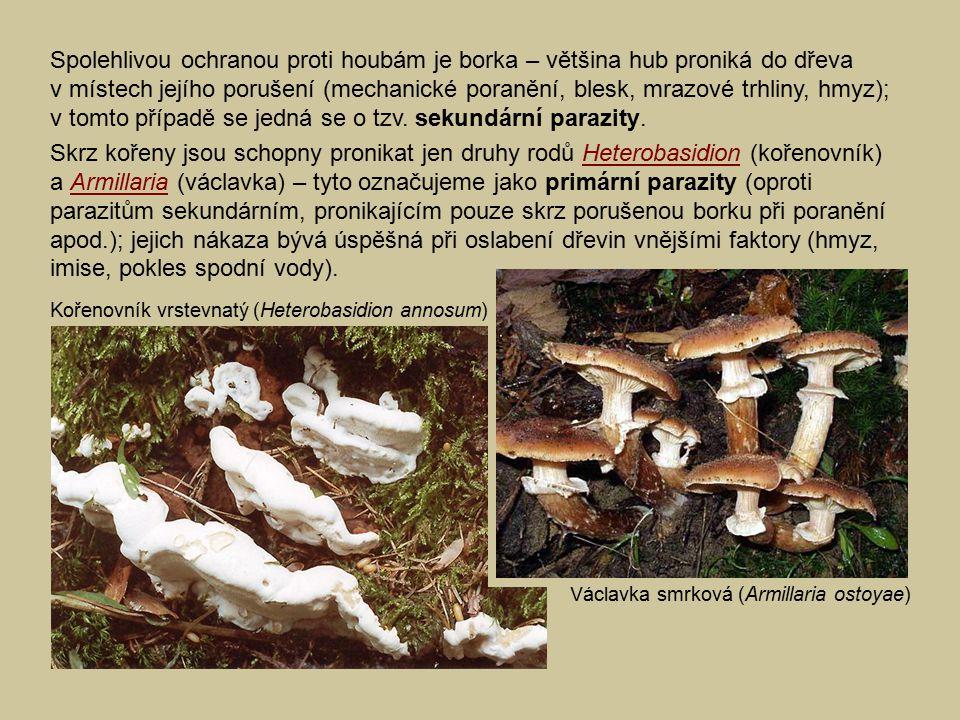 Spolehlivou ochranou proti houbám je borka – většina hub proniká do dřeva v místech jejího porušení (mechanické poranění, blesk, mrazové trhliny, hmyz