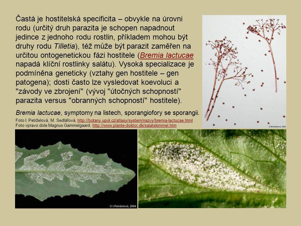 Častá je hostitelská specificita – obvykle na úrovni rodu (určitý druh parazita je schopen napadnout jedince z jednoho rodu rostlin, příkladem mohou b