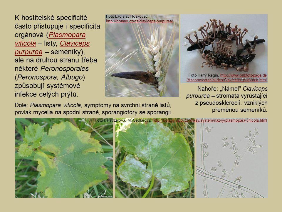 K hostitelské specificitě často přistupuje i specificita orgánová (Plasmopara viticola – listy, Claviceps purpurea – semeníky), ale na druhou stranu t