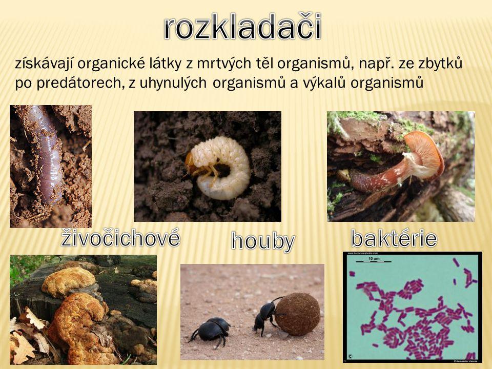 získávají organické látky z mrtvých těl organismů, např. ze zbytků po predátorech, z uhynulých organismů a výkalů organismů