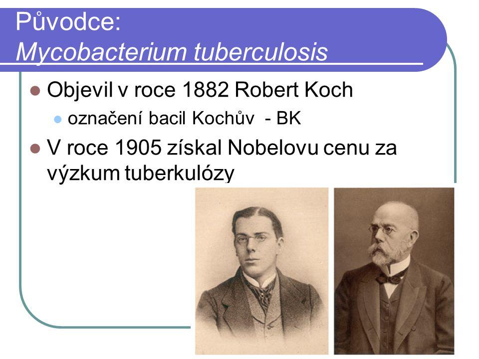 Původce: Mycobacterium tuberculosis Objevil v roce 1882 Robert Koch označení bacil Kochův - BK V roce 1905 získal Nobelovu cenu za výzkum tuberkulózy