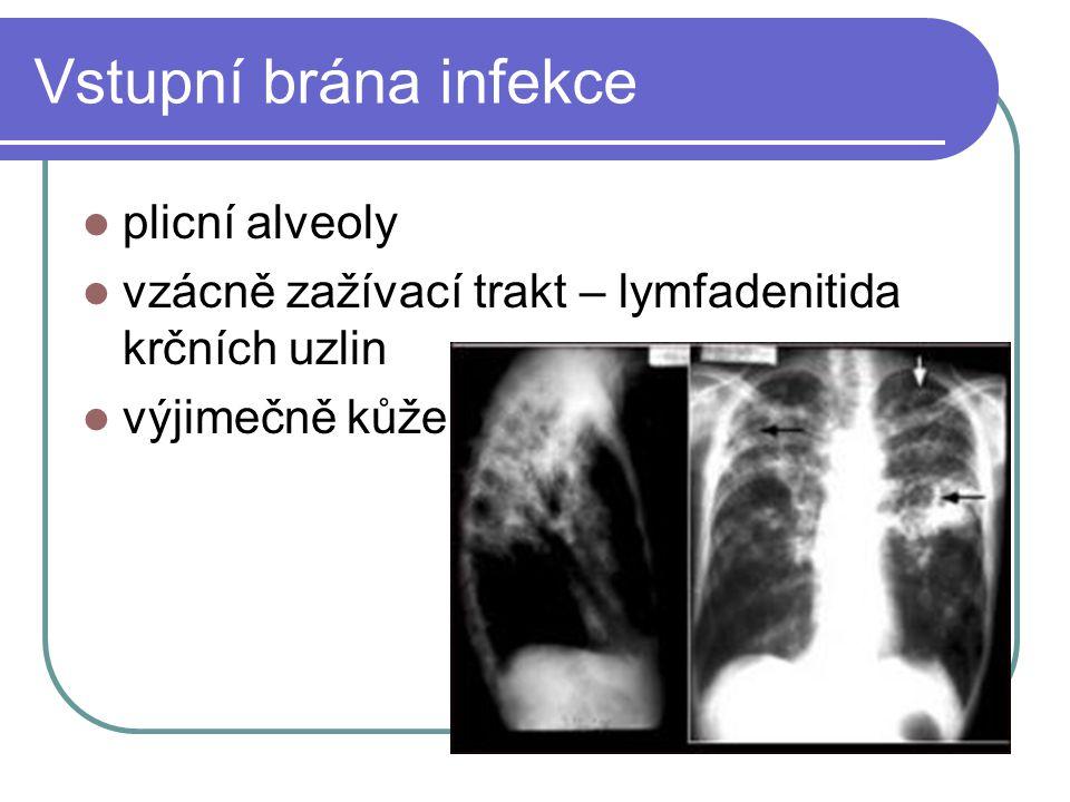 Vstupní brána infekce plicní alveoly vzácně zažívací trakt – lymfadenitida krčních uzlin výjimečně kůže